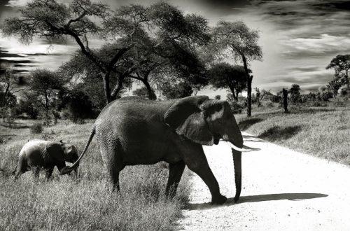 Article : 5 façons de prendre l'Afrique du bon côté